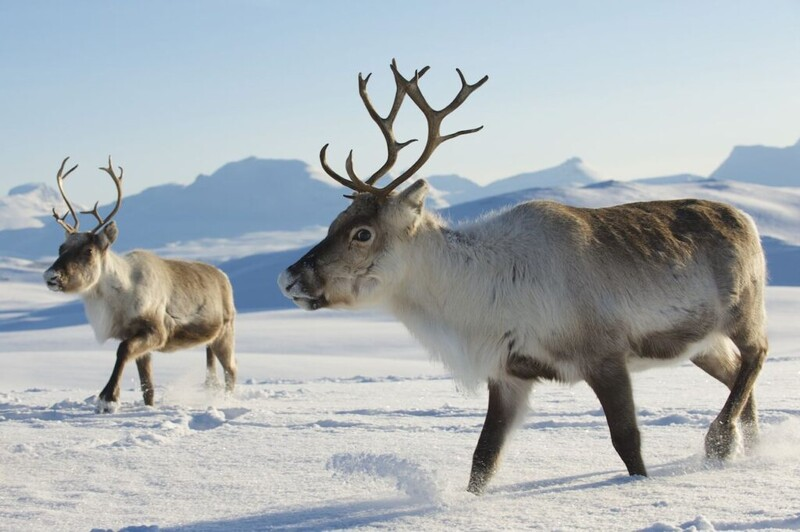 7 majestic Arctic wildlife in danger from global warming 1