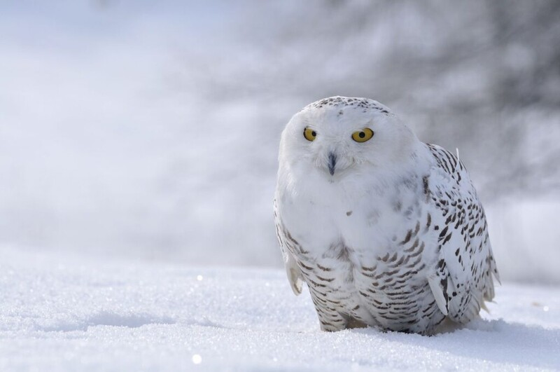 7 majestic Arctic wildlife in danger from global warming 5