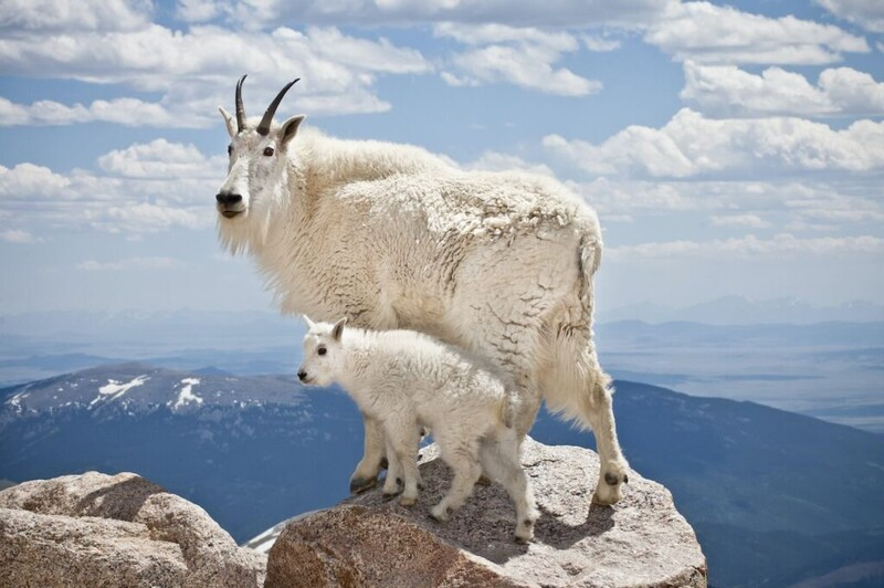 7 majestic Arctic wildlife in danger from global warming 7