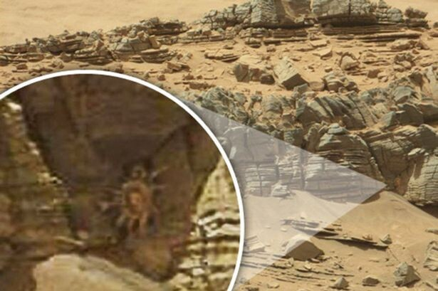 Life on Mars? Space 'crab' spotted on surface of Red Planet 1