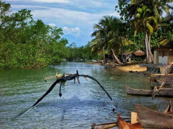 Kongamato – who says pterosaurs are extinct? 3