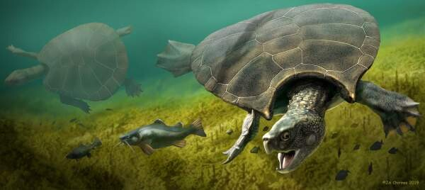 LOCHS LIKE A TURTLE! Loch Ness mystery solved? Scientist says Nessie is ancient sea TURTLE 'trapped' in lake 2