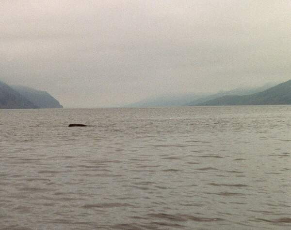 LOCHS LIKE A TURTLE! Loch Ness mystery solved? Scientist says Nessie is ancient sea TURTLE 'trapped' in lake 4