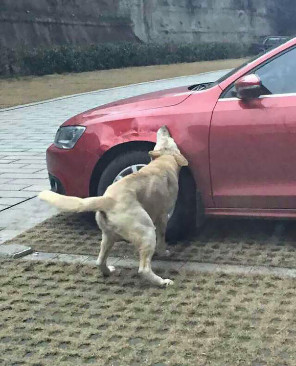 Driver Kicks Stray Dog, It Returns With A Pack Of Friends To Trash His Car 4