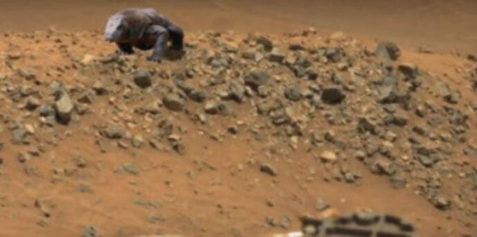 Forget the search for water on Mars! A fossilized dinosaur has been discovered 3
