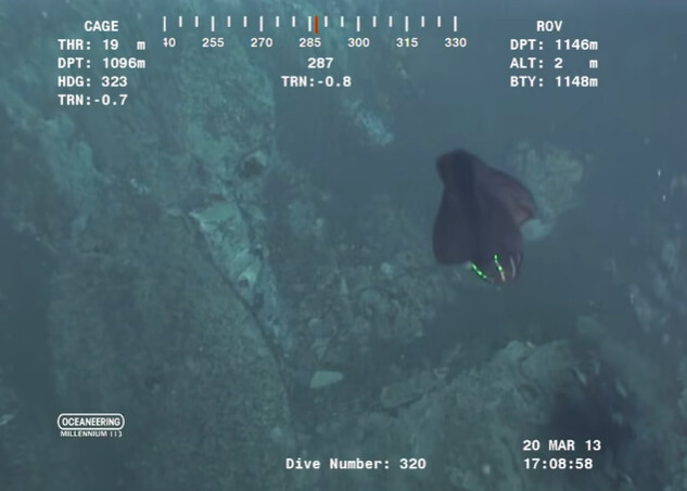 A strange sea shapeshifting Alien-like creature was filmed at the bottom of the ocean (VIDEO) 2