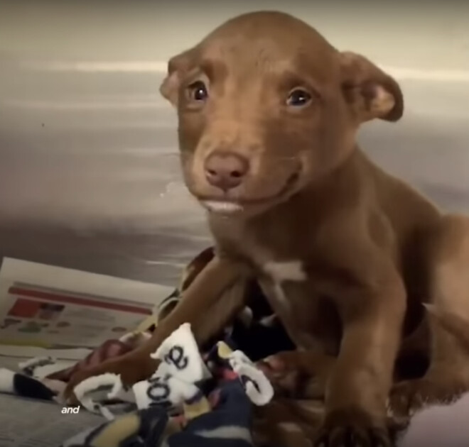 Puppy Found On Interstate Flashes Heart-Melting Grin When Rᴇѕᴄᴜᴇг Talks To Her 2