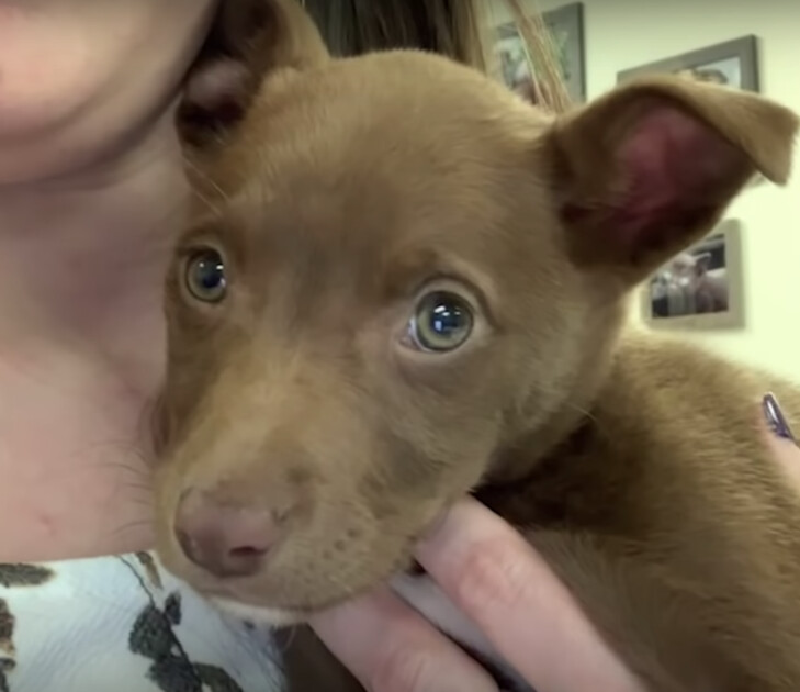 Puppy Found On Interstate Flashes Heart-Melting Grin When Rᴇѕᴄᴜᴇг Talks To Her 3