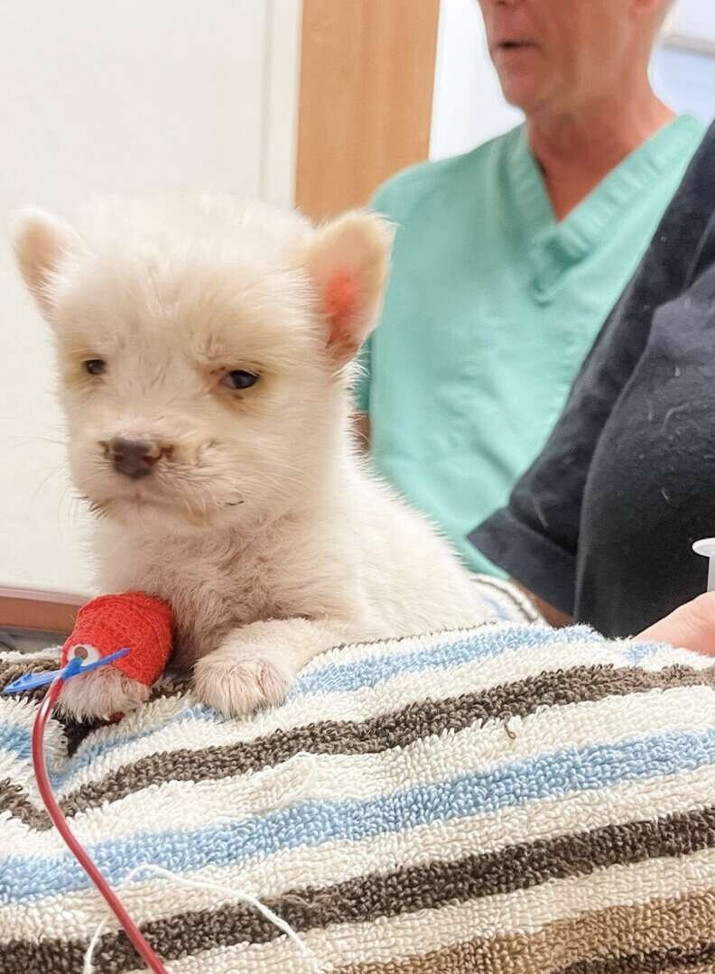 Sweet, Big Dog Checks On Tiny Puppy He Helped Bring Back To Life 4