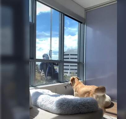 A dog is so sad to say 'Goodbye' to window washer after they become friends 1
