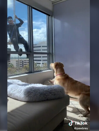 A dog is so sad to say 'Goodbye' to window washer after they become friends 4